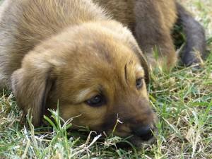 őrző kutyák 2, hogyan lehet sok pénzt keresni