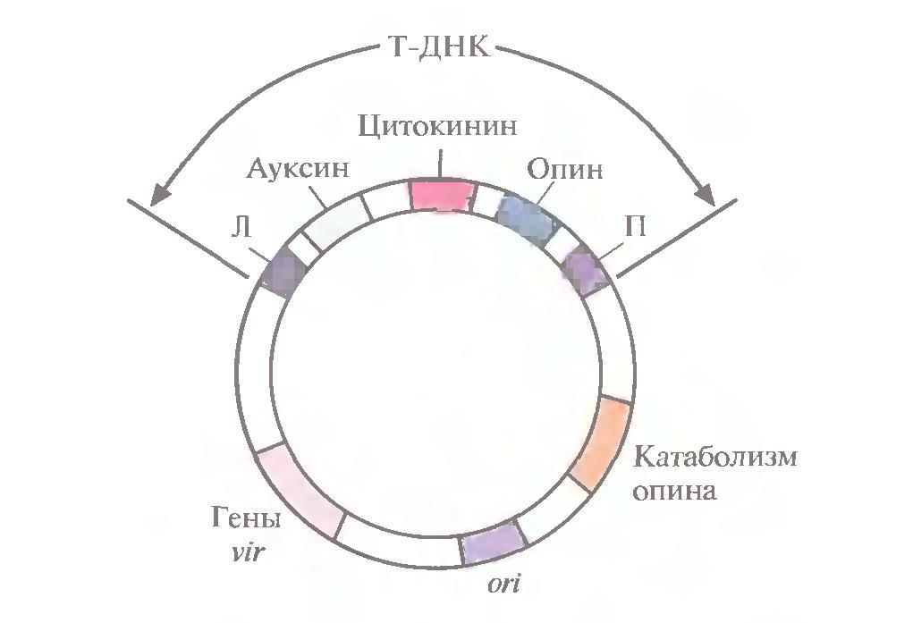 genetikai mátrix stratégia bináris opciók áttekintéséhez
