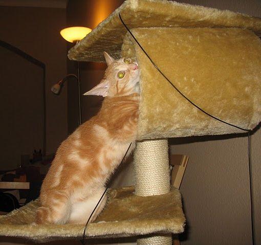 hogyan lehet leggyorsabban pénzt keresni macskában)